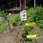 電気柵のイメージ画像